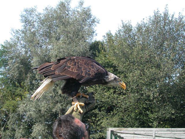 Greifvogelpark11