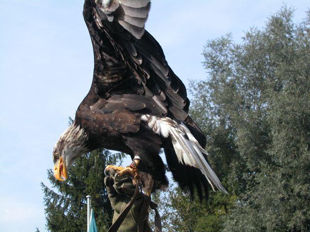 Greifvogelpark3